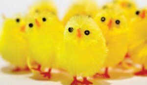 Scandinavian Easter chickens